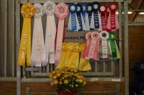 Harvest Moon Dressage Show and NCDCTA Championships 2013