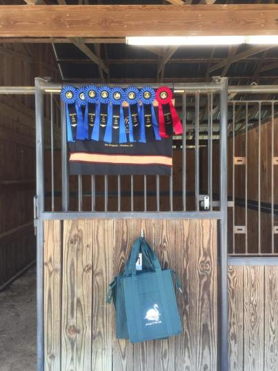 Dressage at the Lake 2015