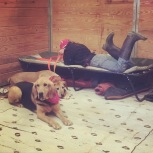 Sam and Daisy in the tack stall, 2015