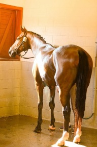 Popstarr enjoying his bath after a great ride!