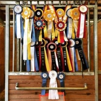 NCDCTA Champs and Harvest Moon Dressage 2015