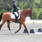 Jennifer Shattuck riding HRH Popstarr at 4th level